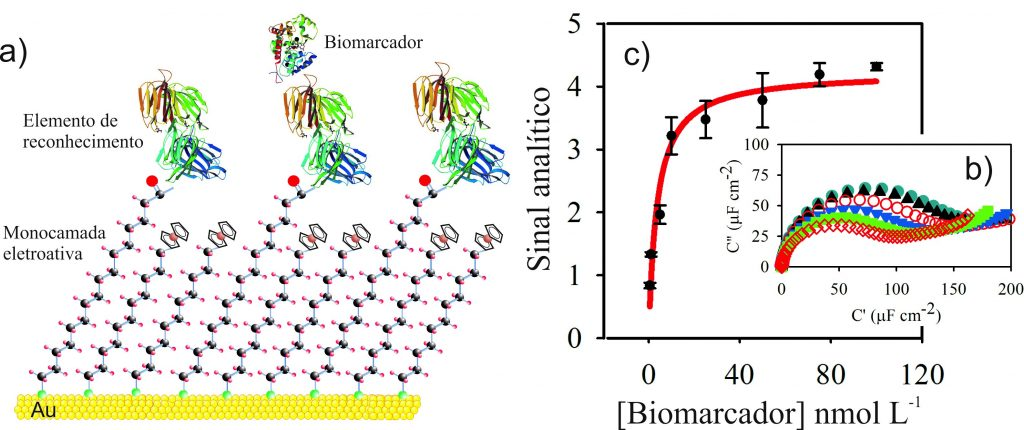 (a)Example of an interface for the detection of biomarkers (molecules related to a certain disease). The interface consists of a monolayer composed of electroactive species and the recognition element (such as, for example, antibody). The interaction between the recognition element and the biomarker causes a change in the electrochemical capacitance signal (b), allowing to construct calibration or saturation curves (c).