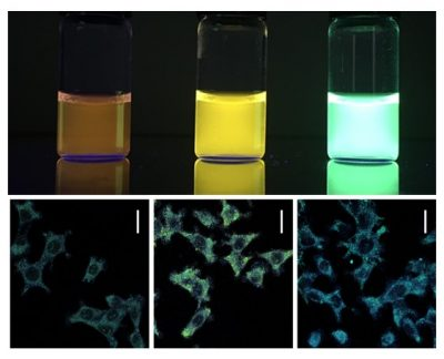 Light emission in various colors of the developed nanomaterials (Ir (III) complexes adsorbed on laponite) distributed in xerogels (upper part) and in liver tissue cells (lower part).
