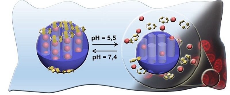 Functioning of the nanomachine loaded with the drug (pink balls). On the left, at physiological pH, the lids close the reservoir's nanochannels. On the right, the more acidic medium generates the removal of the caps and the drug is released.